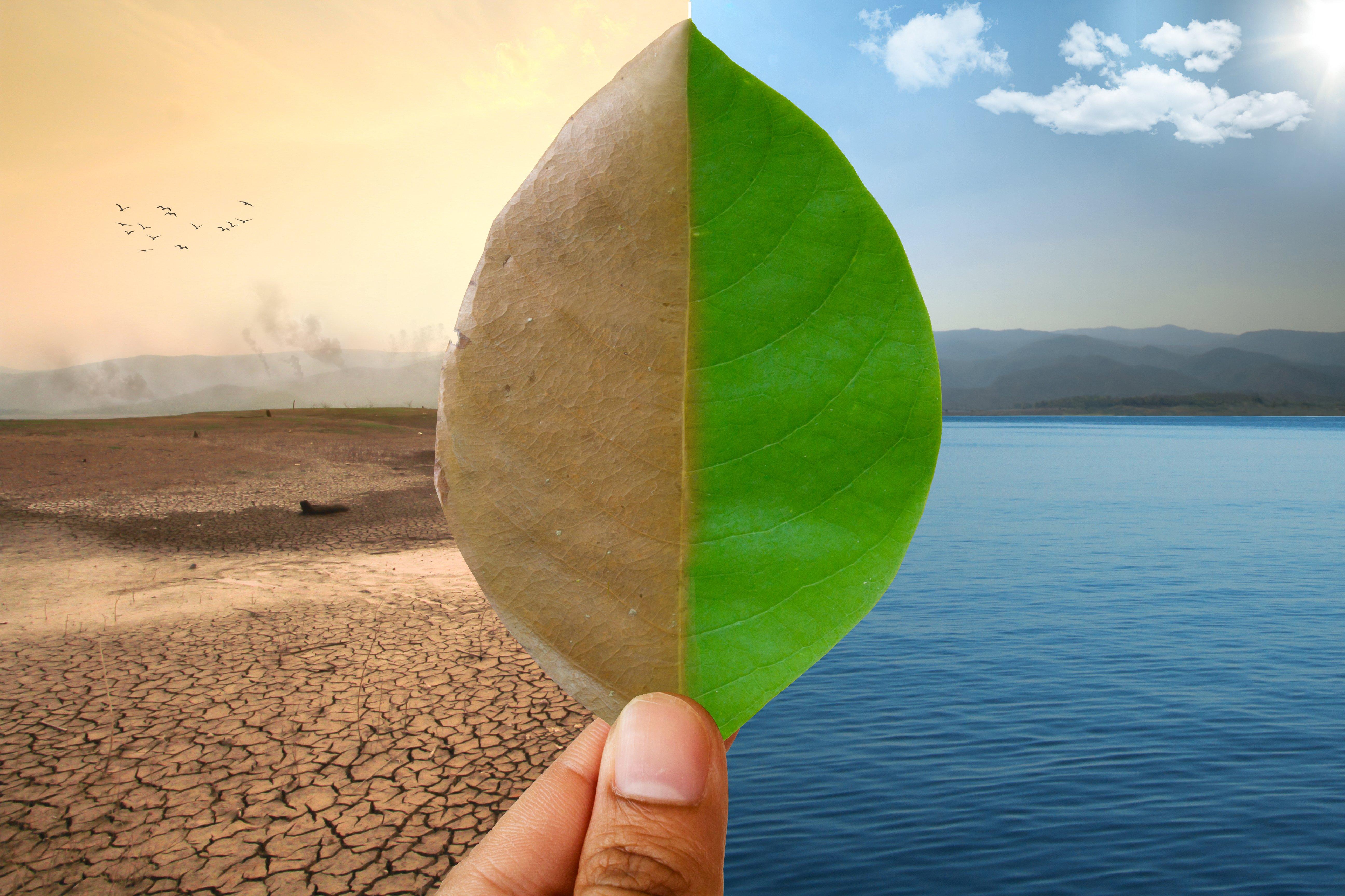 sea-vs-air-freight-environmental-impact